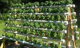 Grow more plants with an A-Frame hydroponic system