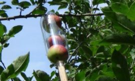How to make a soda bottle fruit picker