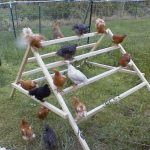 Chicken Jungle Gym