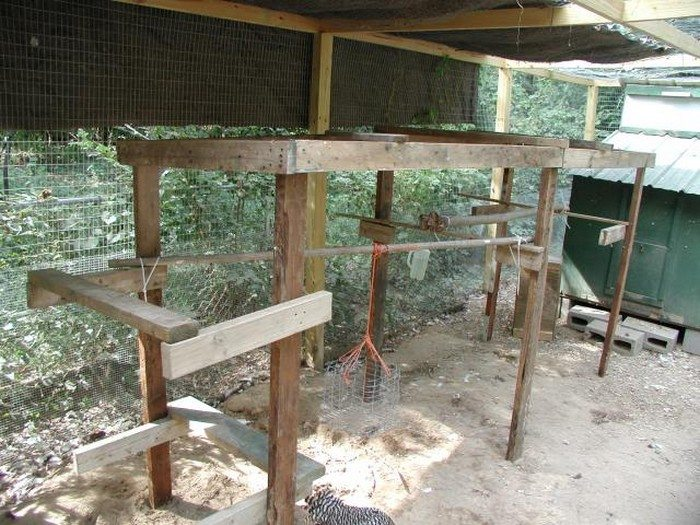Build A Jungle Gym For Your Backyard Chickens DIY Projects For - Backyard jungle gyms