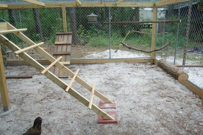 Build a jungle gym for your backyard chickens!  DIY projects for