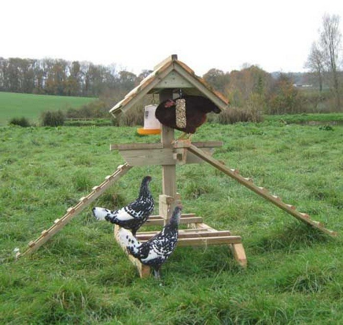 Pinterest Jungle Buildings: Build A Jungle Gym For Your Backyard Chickens!