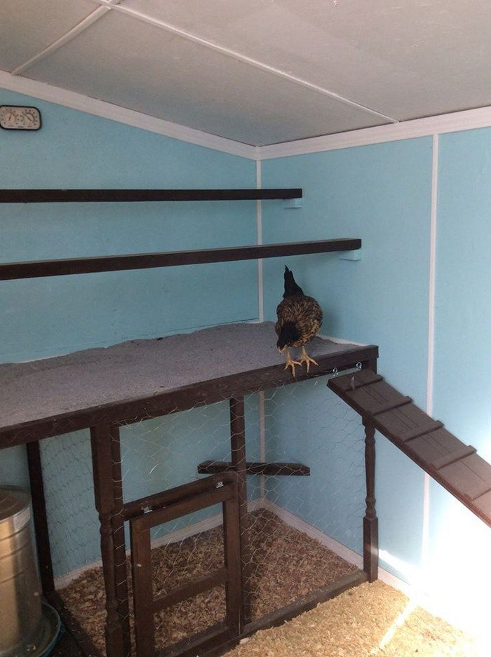 Chicken roost with poop board for easy clean up! | DIY ...