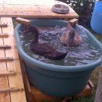 Duck Deck