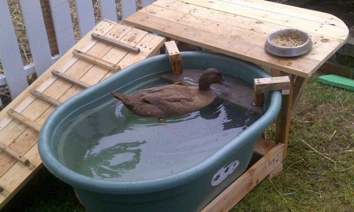 How to build a duck deck