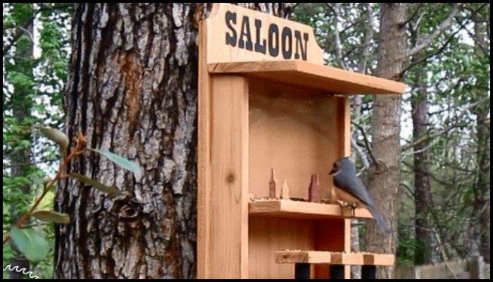 Plan de alimentación de aves gratis para todos los tipos de alimentadores