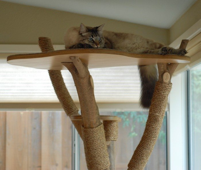 Turn An Old Tree Into A Classy Cat Tower Diy Projects
