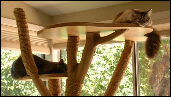 Turn an old tree into a classy cat tower!