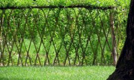Beautiful examples of living willow fences