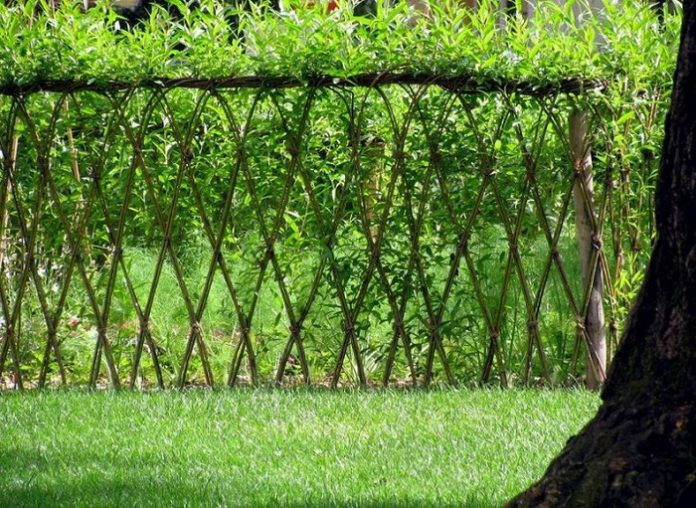 Living Willow Fences