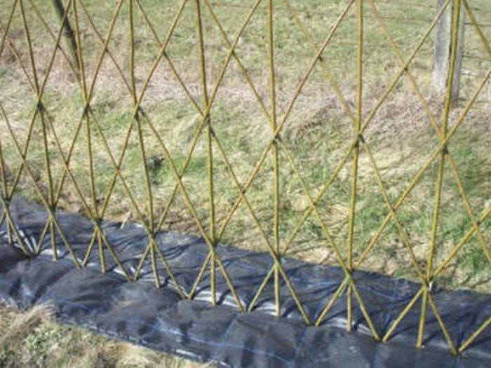 Beautiful examples of living willow fences  DIY projects ...