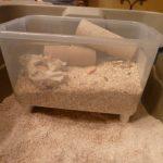 DIY Mealworm Farm