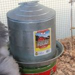 Heated Chicken Waterer - Cookie Tin