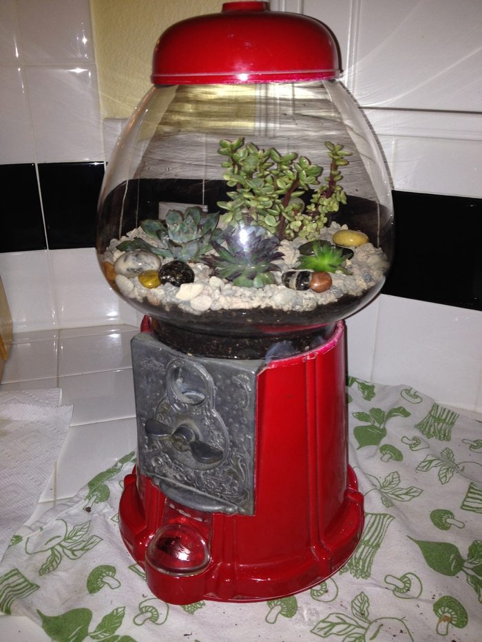 Gumball Machine Terrariums Diy Projects For Everyone