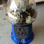 Gumball Machine Terrarium