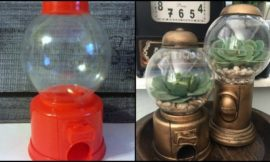 Gumball Machine Terrariums!
