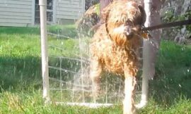 Build Your Pet a PVC Dog Washer