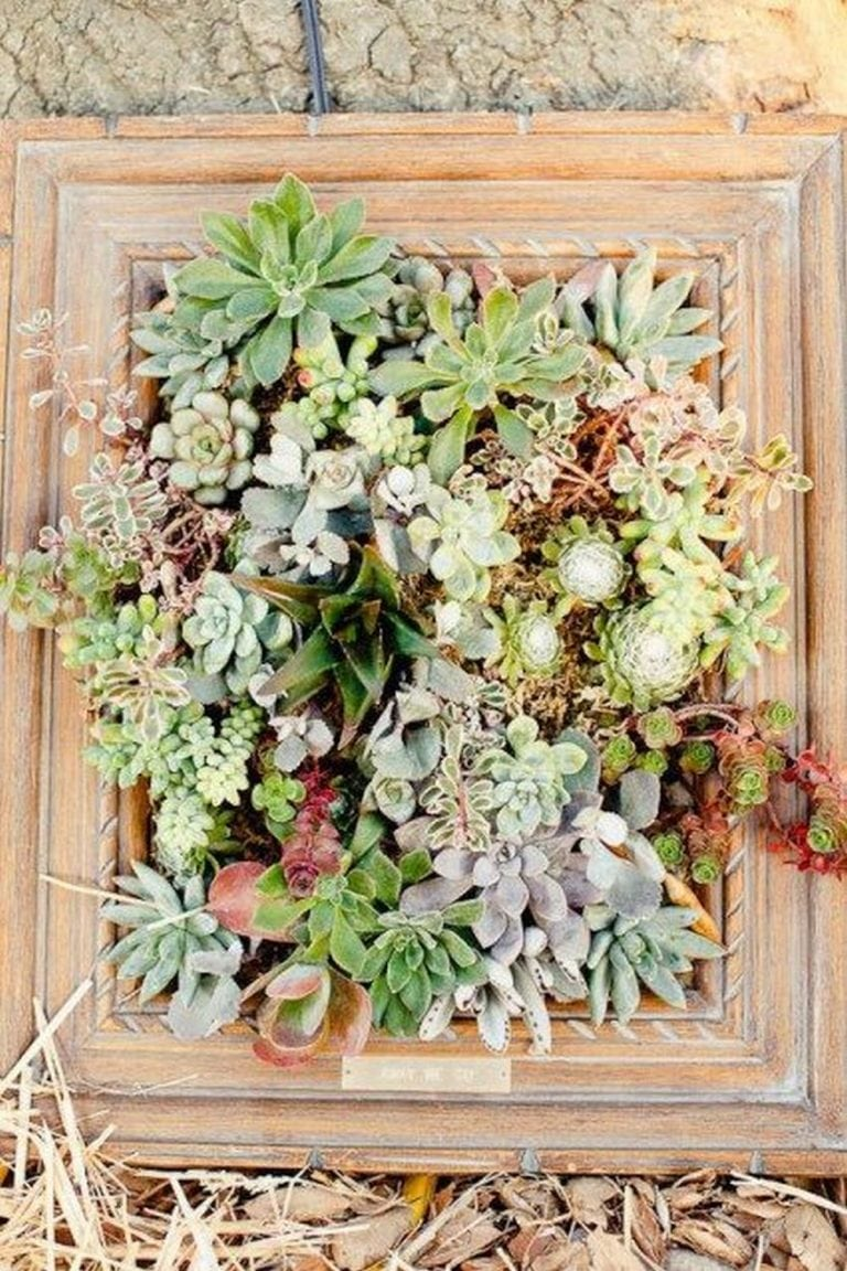 DIY Picture Frame Planter