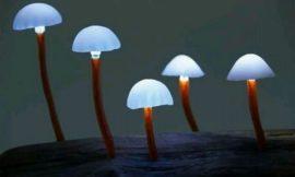 Make Your Own Mushroom Lights