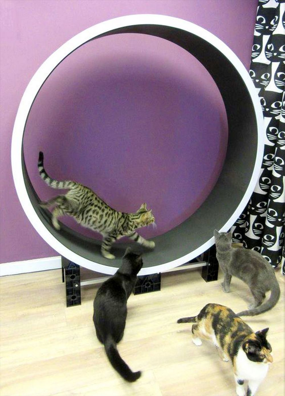 How to Build a Cat Exercise Wheel