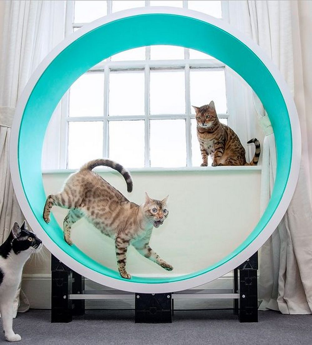 This cat exercise wheel would be a perfect gift for your pet!