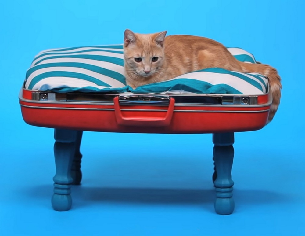 Turn your old suitcase into a new bed for your beloved pet!