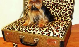 How to Turn a Suitcase into a Pet Bed
