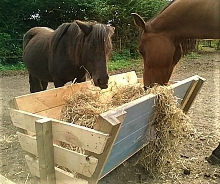 How to Build a Hay Feeder From Pallets