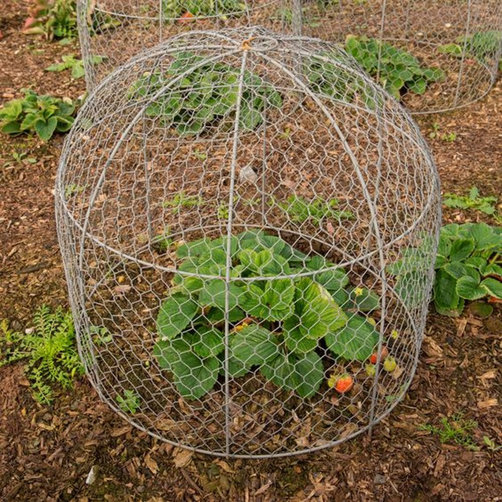 Protect your young new plants using garden cloches!