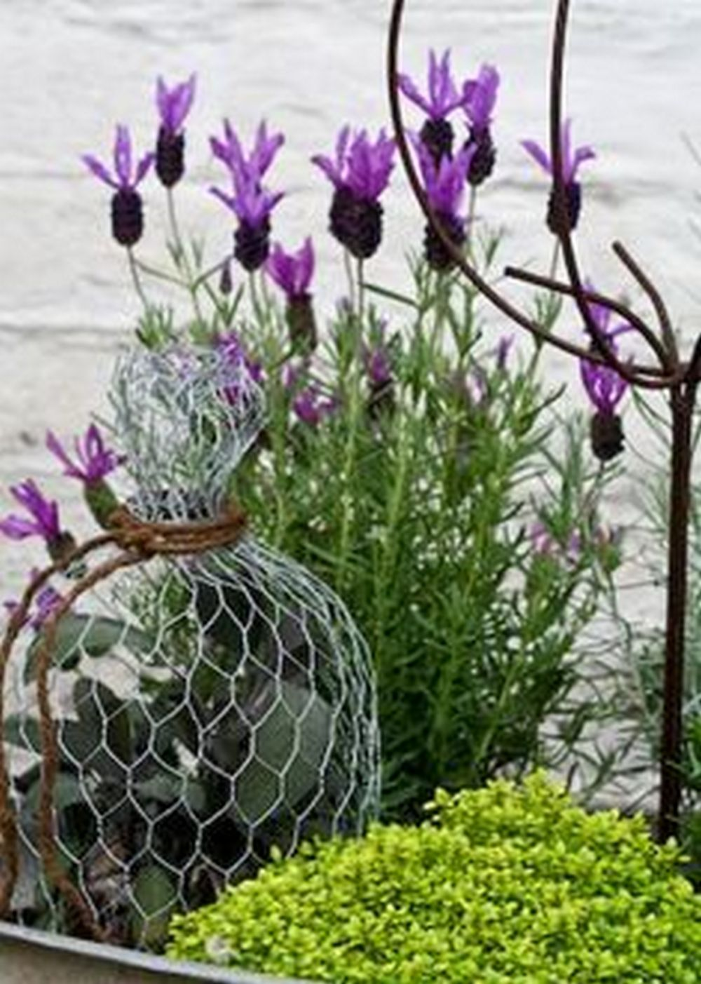 DIY Garden Cloche to Protect Young New Plants